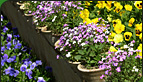 Professionally planted flowers from our landscaping services in Kansas City